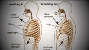 singing tips, how to sing better diaphragm